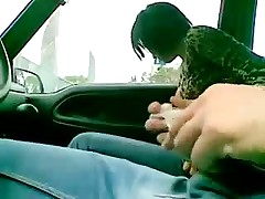 Italian fuck in car